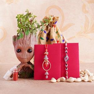 Bhaiya Bhabhi Rakhi with Jade Plant Combo