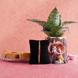 Rudraksha Rakhi with Snake Plant and Sweets Combo