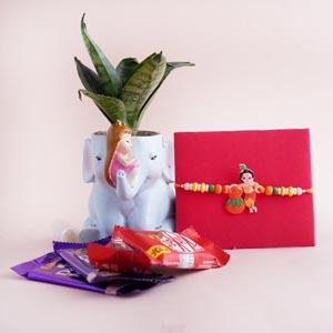 Krishna Kids Rakhi with Snake Plant and Chocolates Combo