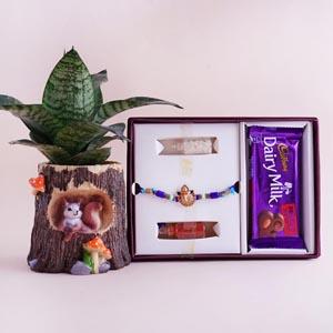 Ganesha Rakhi Signature Box with Snake Plant in Designer Pot