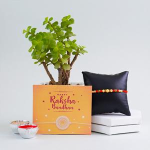 Pearl Rakhi with Jade Plant Combo